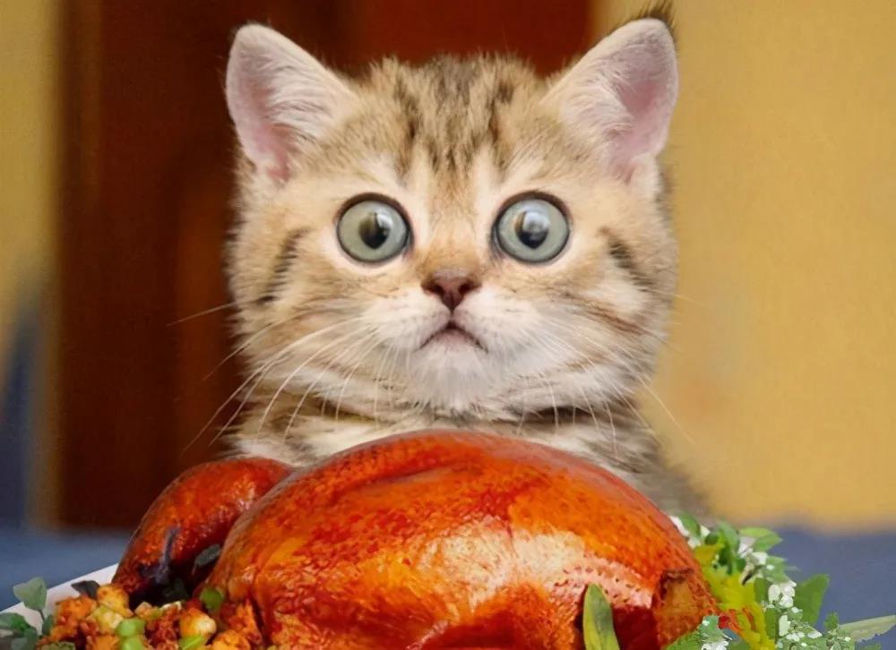"""猫咪饮食五大误区,条条是""""陷阱"""",你中了几个?"""