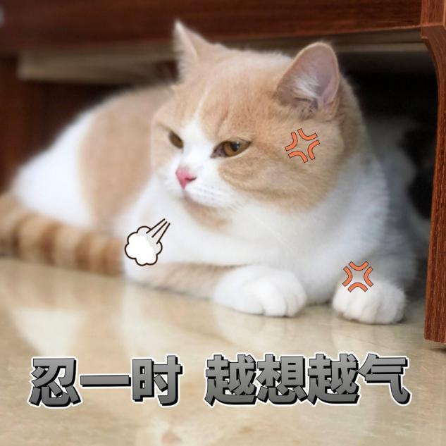 宠物猫吃低价的猫粮对猫的健康影响有多大?