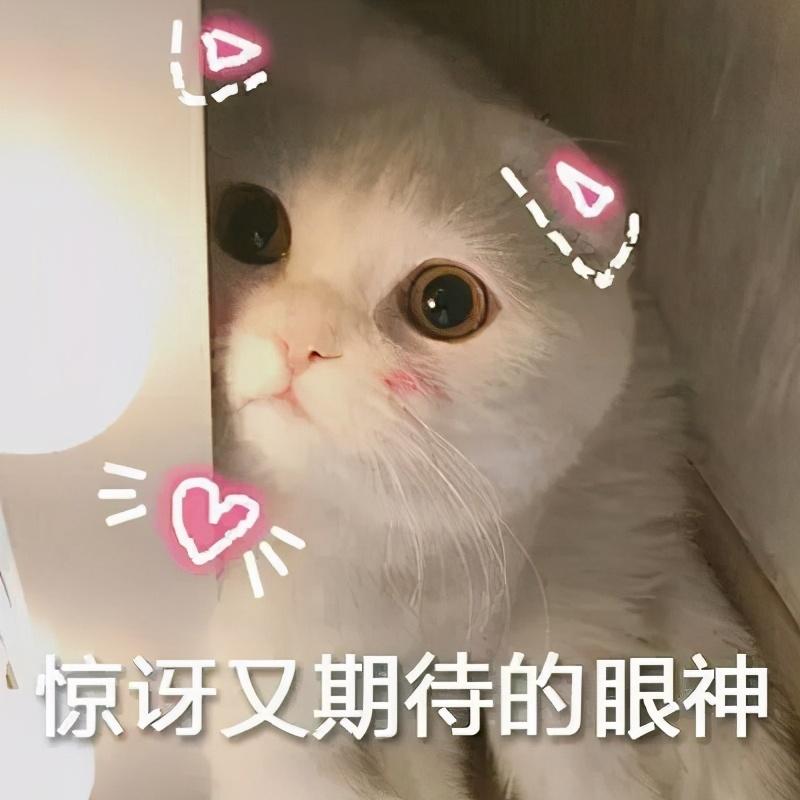 """这5种食物是猫咪的""""最爱"""",你喂对了吗?"""
