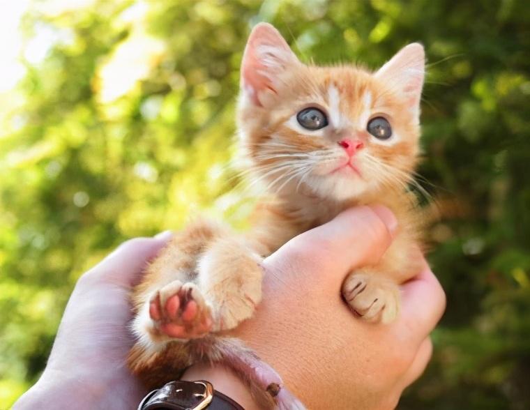 饲养攻略:猫咪两三个月大,应该怎么养?
