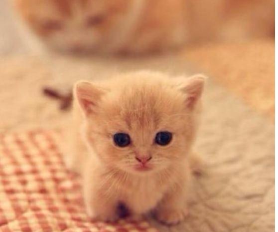 猫咪的成长日记