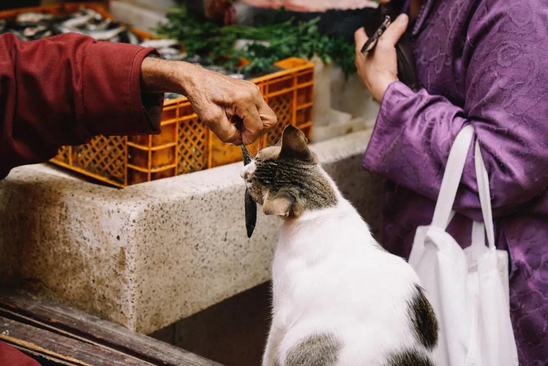 猫咪吃干粮好还是湿粮好