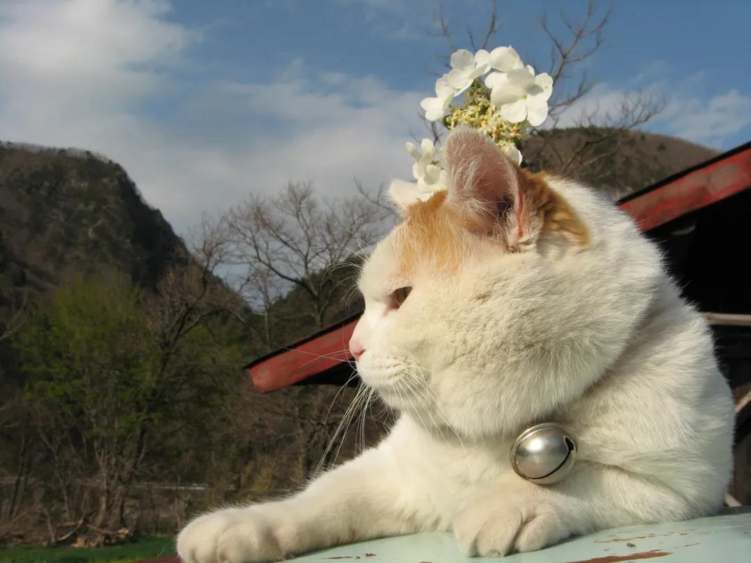 """猫咪若有这几种表现,说明患上了""""老年痴呆"""",多陪它们一点吧"""