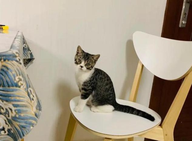 猫干粮、罐头、冻干,哪种猫粮才最适合猫咪吃?