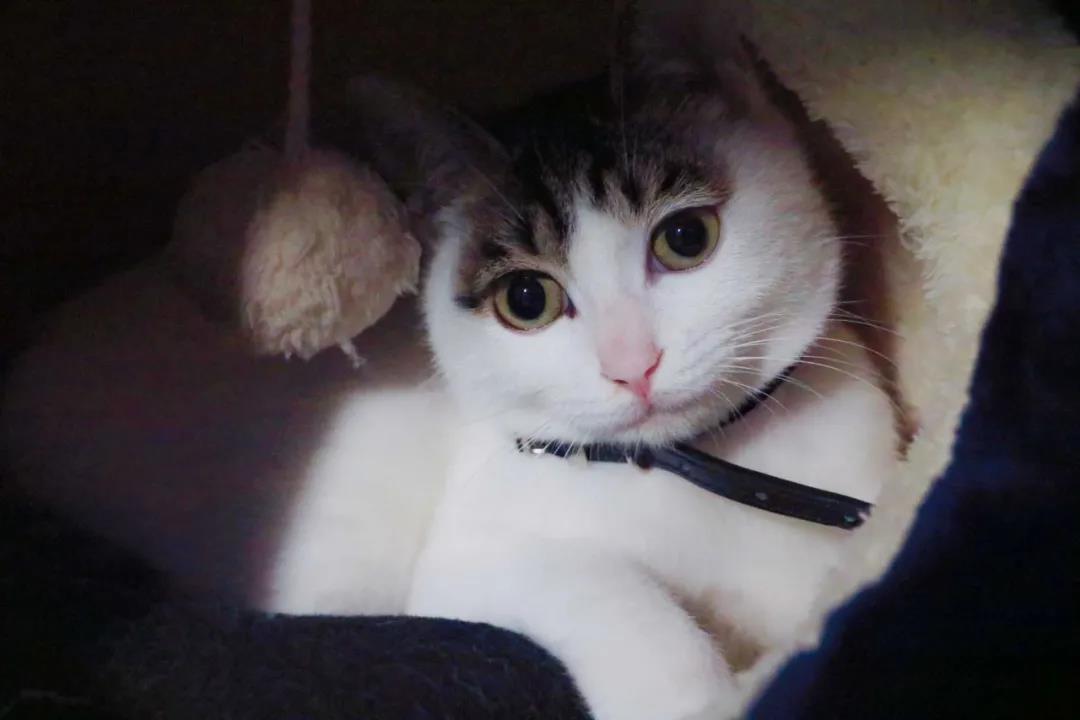 养了一年的猫还是养不熟,攻击主人,该不该扔掉?