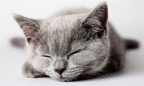 猫咪不好好主动吃猫粮,每天只吃一点点,怎么办?