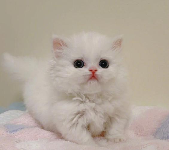 猫咪真的需要零食吗?带你了解猫咪零食