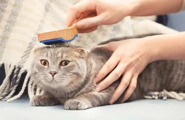 猫咪掉毛原因多 卡比猫粮添加Omega 6 & Omega 3让毛发更漂亮