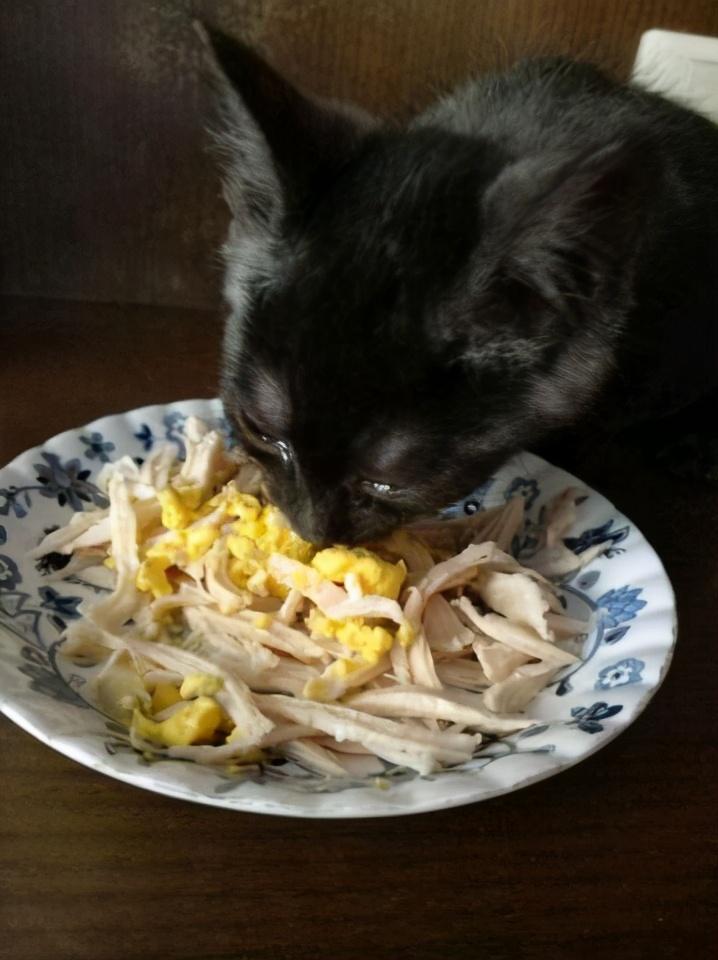 这6种食物,对于猫咪来说是人间美味,你有喂过吗?