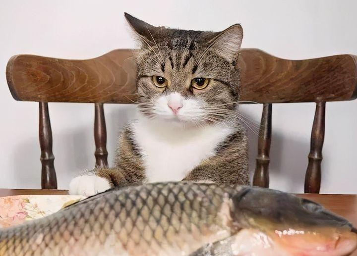 除了吃猫粮,这6种辅食猫咪也可以吃,营养又健康