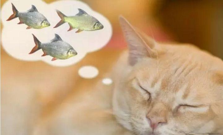 对猫咪有益的食物有哪些?