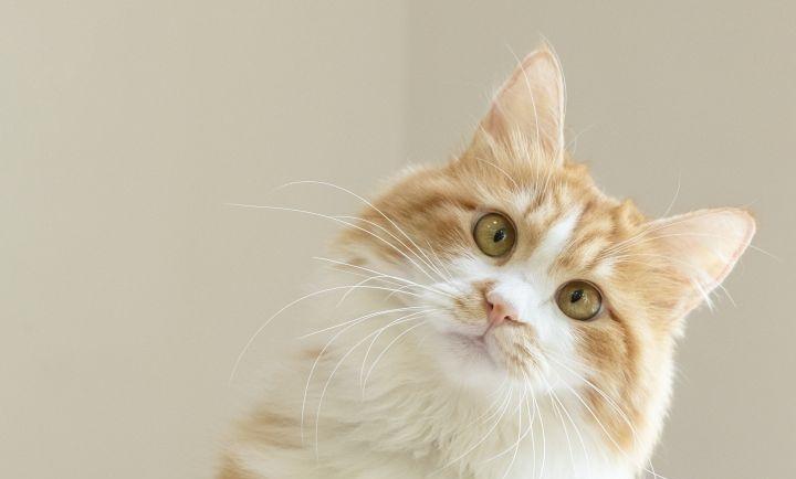 猫粮怎么喂好 喂养技巧盘点