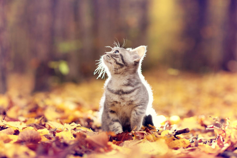 如何提高猫猫免疫力(骗水、储粮、选粮、锻炼)