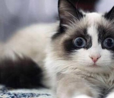 猫咪不能吃的食物有哪些?这些东西太可怕了